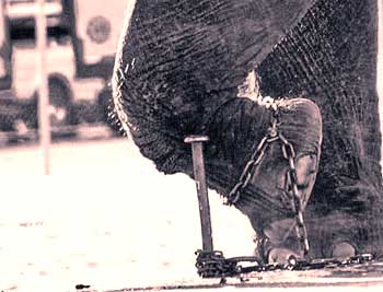 Chained Elephant Story - Motivational Stories for Life English