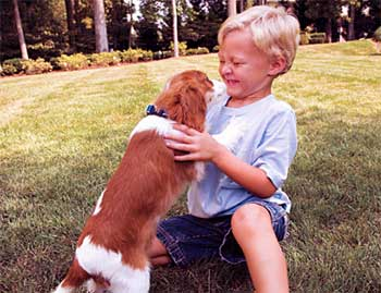 Puppies for Sale Inspirational Story - Little Kid Compassion Short Story