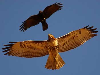 Crow and Hawk Story - Trust Yourself Motivational Stories