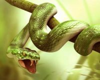 Snake and The Holy man Story - Teaching Life Lesson Short Moral Stories