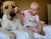 Short Story on Faithful Dog - Heart Touching Stories abt Dogs Faithfulness