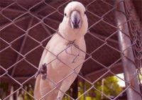 Parrot Moral Stories - Smart Parrot and Sage Wisdom Story for Learning