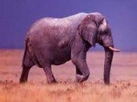 Elephant Stories for Kids - Bird Revenge Short Moral Stories Panchtantra Stories