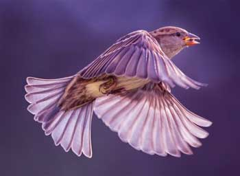Sparrow Story - Clever Sparrow and Eagle Moral Motivational Short Stories