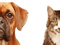 Cat Dog Story - Self Help is Best Help Story, Never Leave Work on Others