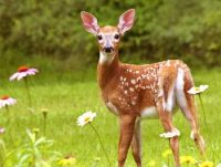 Deer Story - Gardener Plan to Trap Deer n Danger of Addiciton Moral Story