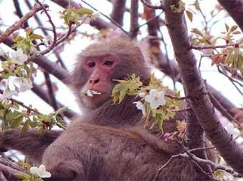 Gardener and Foolish Monkeys Story - Bad Leadership Leads to Disaster