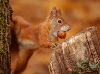 Squirrel Story - Reality of Today Short Story Stuck in 9 to 5 Cycle of Work