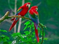 Two Parrots Story - Why do we Fail Interesting Motivational Moral Story