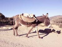 Clever Boy Story - Man and His Lost Donkey Moral Story Judging Others