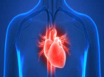 10 Interesting and Facinating Facts about Human Heart