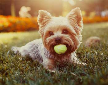 Amazing and Fun Facts about Dogs - Facts you May not Know abt ur Dog