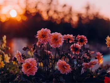 29 Fun n Amazing Facts about Flowers